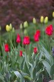 Färgrika blommor i natur Royaltyfri Bild