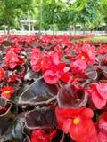 Färgrika blommor i parkera Fotografering för Bildbyråer