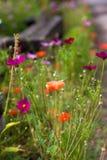 Färgrika blommor i vår Arkivbilder