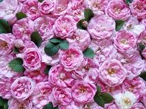 färgrika blommor inramniner många ro Royaltyfria Foton
