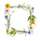 färgrika blommor inramniner sommar Royaltyfria Bilder