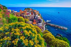 Färgrika blommor och touristic fiskeläge, Manarola, Cinque Terre, Italien fotografering för bildbyråer