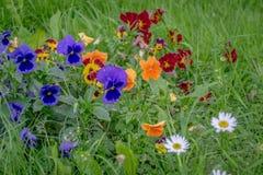 Färgrika blommor på det gröna gräset Arkivfoton