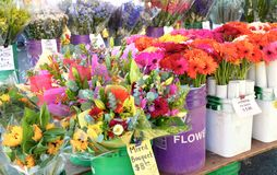 Färgrika blommor på en amerikansk bondes marknad Royaltyfri Bild