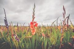 Färgrika blommor på ett fält i molnigt väder Arkivbilder