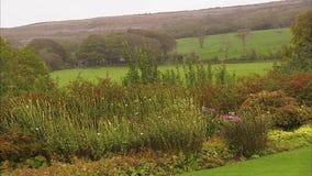 Färgrika blommor på ett irländskt landskap lager videofilmer