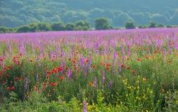 Färgrika blommor på fält Royaltyfri Foto