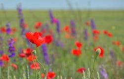 Färgrika blommor på fält Fotografering för Bildbyråer