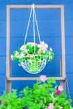 Färgrika blommor på korgen Fotografering för Bildbyråer