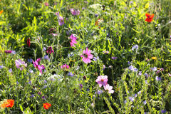 Färgrika blommor, selektiv fokus Arkivbild