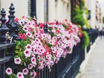 Färgrika blommor som smyckar gatorna av London Royaltyfri Foto