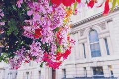 Färgrika blommor som smyckar gatorna av London Arkivbild