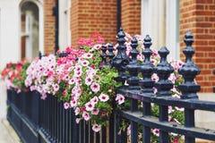 Färgrika blommor som smyckar gatorna av London Royaltyfria Bilder