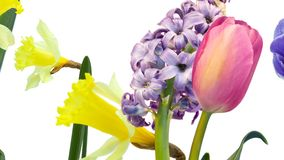 F?rgrika blommor, tulpan, p?sklilja, hyacint, anemon i r?relse p? vit bakgrund stock illustrationer