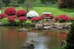 Färgrika buskar och Koi Pond Arkivfoto