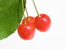 färgrika Cherry arkivbild