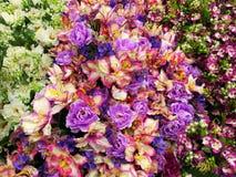 Färgrika dekorativa blommor Royaltyfri Fotografi