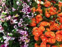 Färgrika dekorativa blommor Fotografering för Bildbyråer