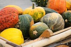 Färgrika dekorativa pumpor och kalebasser i trävagn i öppet M fotografering för bildbyråer