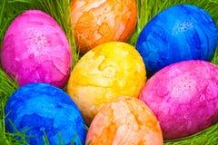 Färgrika easter ägg med dagg tappar gömt i gräset Royaltyfri Bild