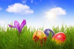 Färgrika easter ägg och purpurfärgade krokusar Royaltyfri Foto