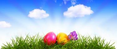 Färgrika easter ägg och purpurfärgade krokusar Arkivbild