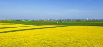Färgrika fält i vår Royaltyfri Bild