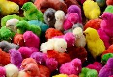 Färgrika fågelungar Royaltyfria Bilder