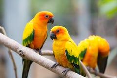 Färgrika fåglar Arkivfoton