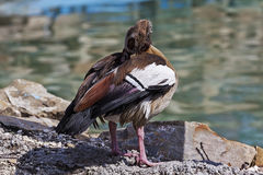 Färgrika fåglar 1 Arkivfoto