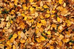 färgrika fallleaves Royaltyfria Foton
