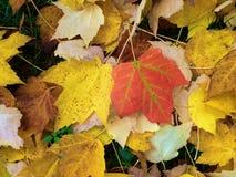 färgrika fallleaves Arkivfoto