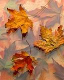 färgrika fallleaves för bakgrund Royaltyfri Fotografi