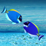färgrika fiskar royaltyfri foto