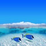 färgrika fiskar Royaltyfria Bilder