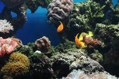 färgrika fiskar Arkivbilder