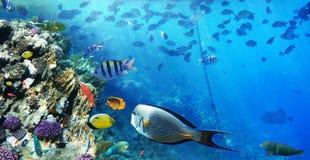 Färgrika fiskar för korallrev royaltyfria foton