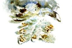 färgrika fjädrar Royaltyfri Bild
