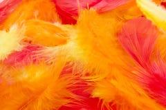 färgrika fjädrar för bakgrund Arkivfoto