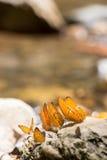 färgrika fjärilar Arkivbild