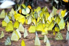 färgrika fjärilar Royaltyfria Bilder
