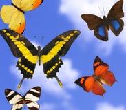 färgrika fjärilar Arkivfoton