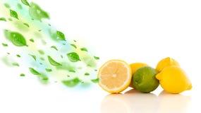 Färgrika frukter med gröna organiska blad Royaltyfri Fotografi