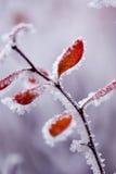 färgrika fryste leafs Arkivfoton