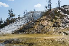 Färgrika geologiska bildande på terrasserna på Mammoth Hot Springs terrasserar, den Yellowstone nationalparken, Wyoming, USA Arkivfoton