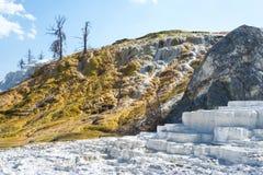 Färgrika geologiska bildande på terrasserna på Mammoth Hot Springs terrasserar, den Yellowstone nationalparken, Wyoming, USA Royaltyfri Fotografi