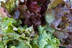 färgrika grönsallater Arkivbild