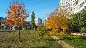 Färgrika gula träd nära det bosatta byggnads- och skolabladet faller royaltyfri fotografi