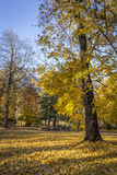 Färgrika guld- kulöra träd Royaltyfri Bild