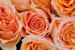 Färgrika härliga rosor blommar bakgrund för makrocloseupkortet Arkivbild